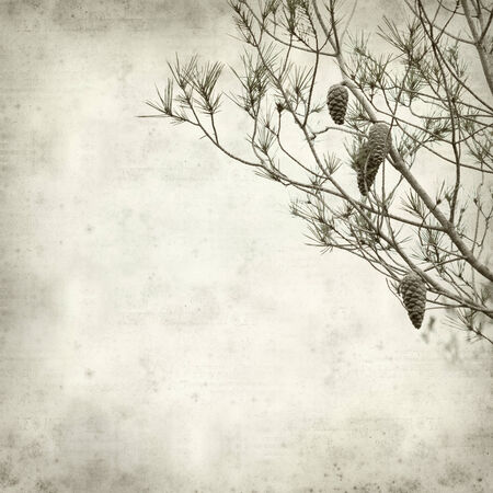 textured old paper background with pine tree branches photo