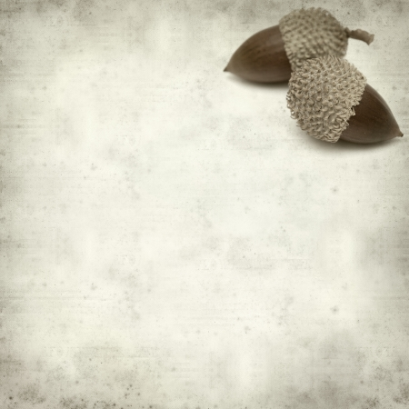 textured old paper with acorns photo