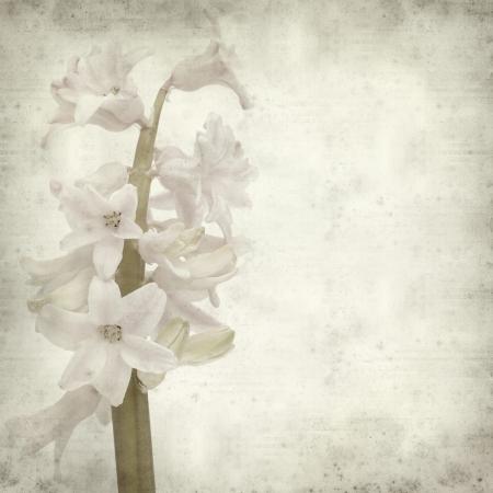 texture vieux fond de papier avec ouverture jacinthe;