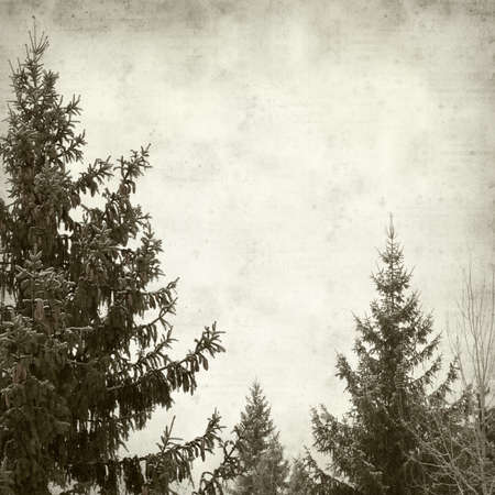 textured old paper background with winter trees photo