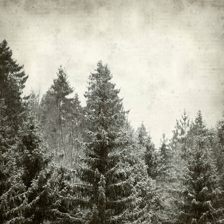 textured old paper background with winter forest photo