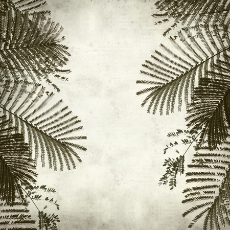 textured old paper background with acacia leaves  photo