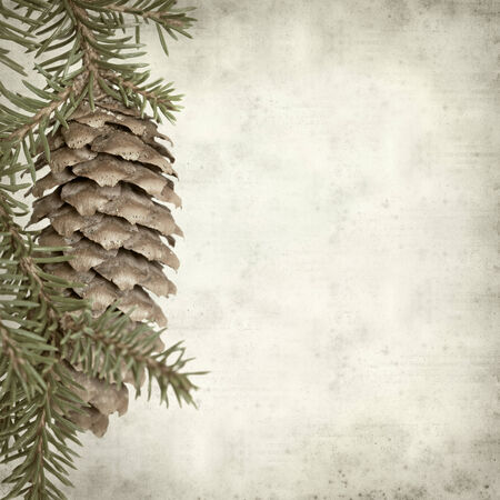 textured old paper background with spruce branch with cone photo