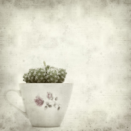textured old paper background with vintage coffee cup and small cactus photo