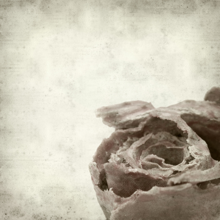 kindling: textured old paper background with rose kindling