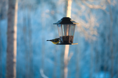 birds at a feeder with peanuts photo