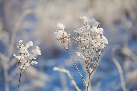 thin ice: frozen plants - small crystals of hoarfrost covering dead flora Stock Photo