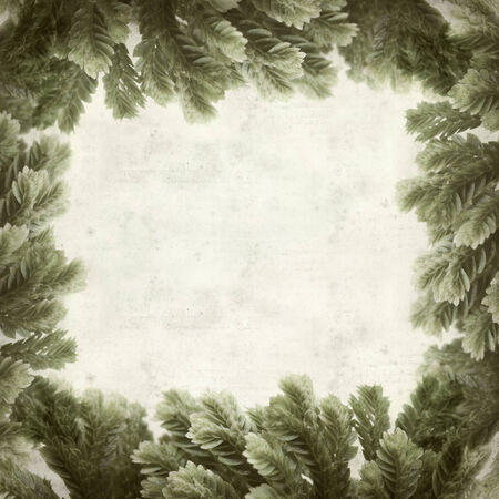 allies: textured old paper background with Selaginella;, tropical moss