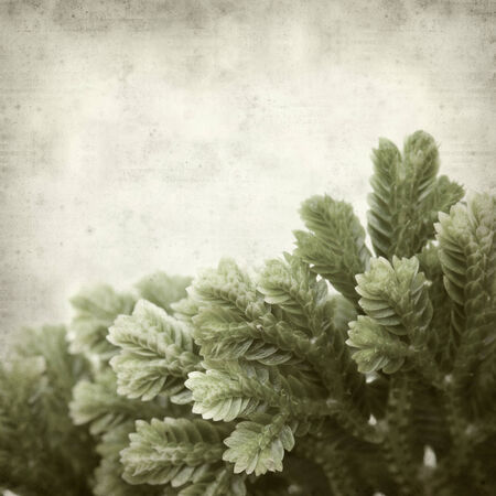 textured old paper background with Selaginella;, tropical moss