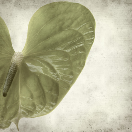 spadix: textured old paper background with green Anthurium flower