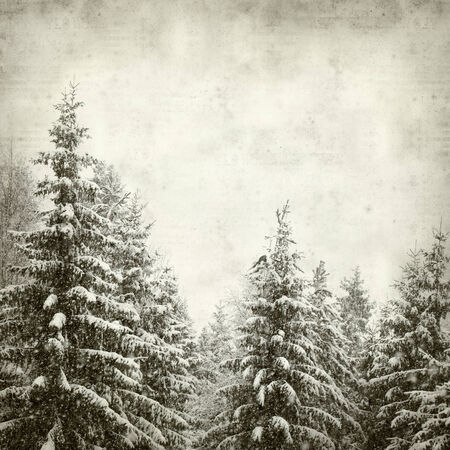 textured old paper background with trees under snow photo