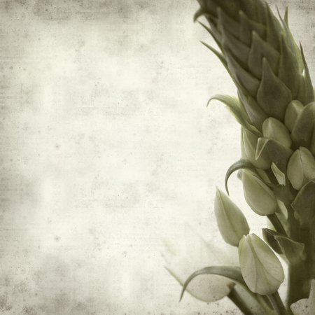ornithogalum: textured old paper background with Ornithogalum