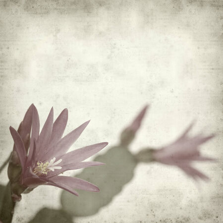 textured old paper background with cactus photo