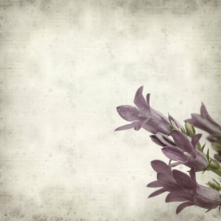 bellflower: textured old paper background with wall bellflower