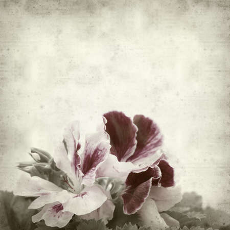 textured old paper background with geranium photo