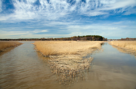 Spring in Southern Finland, reeds around Porvoo fjord photo