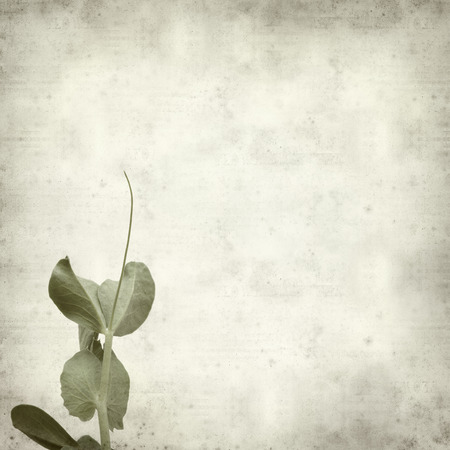 plantlet: textured old paper background with garden pea shoots