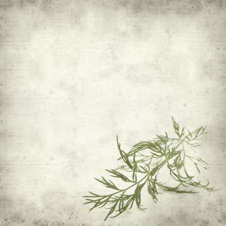 textured old paper background with dill photo
