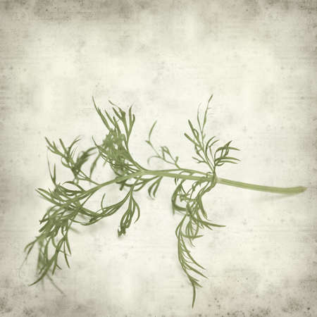 threadlike: textured old paper background with dill