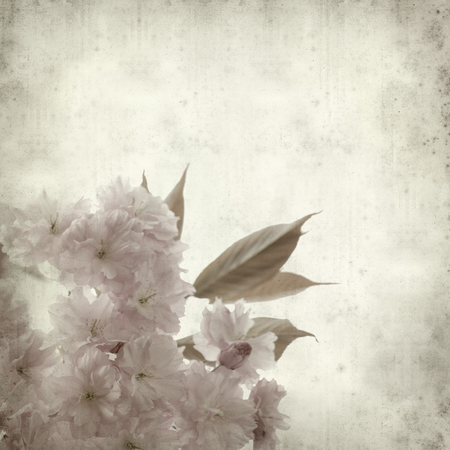 textured old paper background with spring blossoms photo