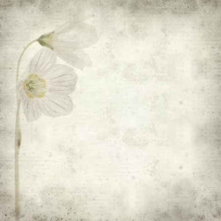textured old paper background with common wood sorrel photo