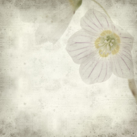 acetosella: fondo de textura de papel viejo con acedera com�n