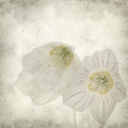 woodsorrel: textured old paper background with common wood sorrel Stock Photo
