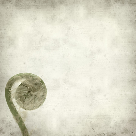 textured old paper background with fern leaf unfurling photo