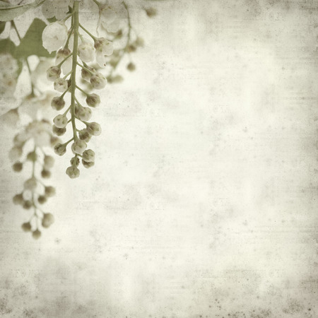textured old paper background  photo