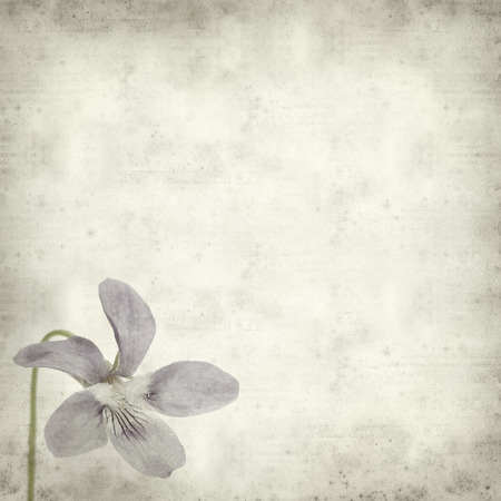 textured old paper background with wild violet photo