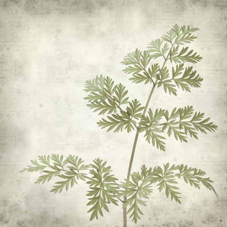 textured old paper background with bwild parsley photo