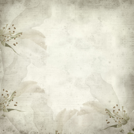 textured old paper background with apple blossom photo