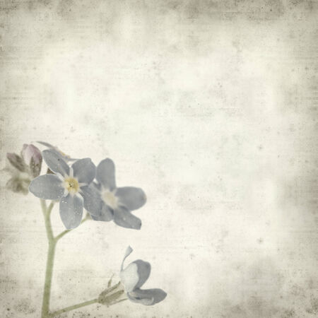 textured old paper background with forget-me-not photo