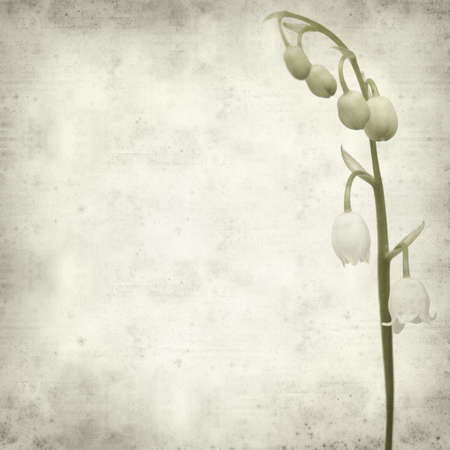 textured old paper background with lily-of-the-valley photo