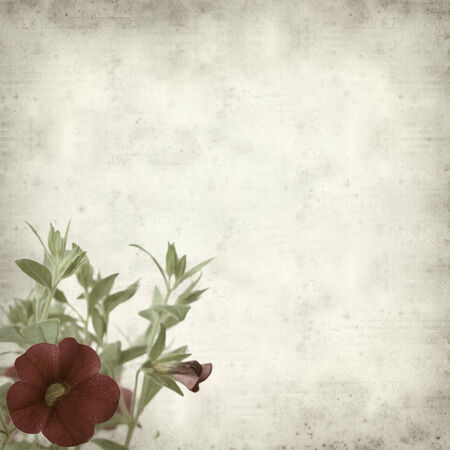 textured old paper background with dark red flowering petunia photo