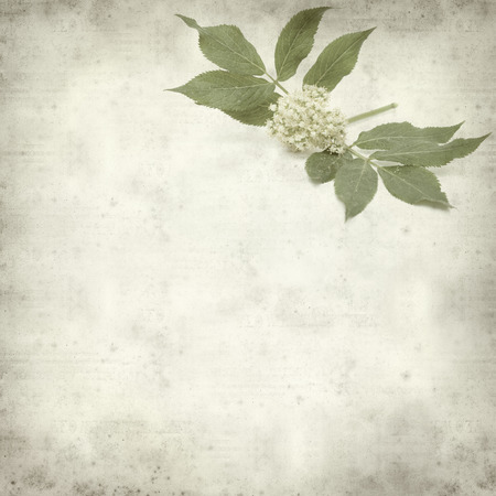 textured old paper background withred elder flowers photo