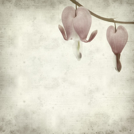 bleeding heart: textured old paper background with bleeding heart flowers Stock Photo