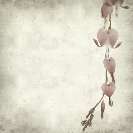 textured old paper background with bleeding heart flowers photo