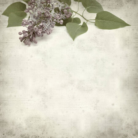 textured old paper background with common lilac inflorescence photo