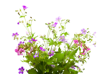 wild flowers bunch isolated on white Reklamní fotografie
