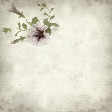 textured old paper background with lilac variegated petunia flower photo