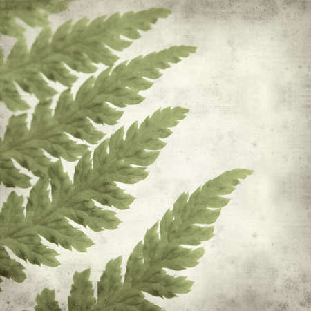 fractality: textured old paper background with young fern leaf Stock Photo