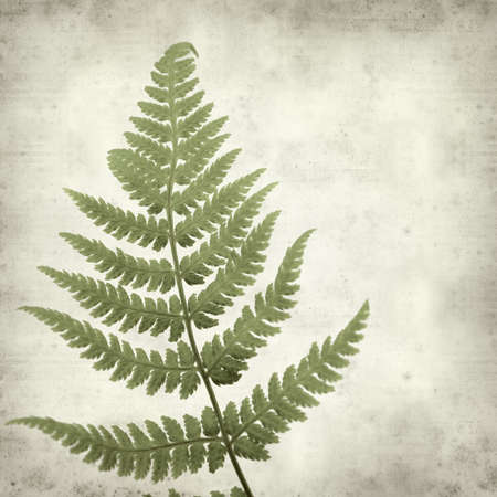 textured old paper background with young fern leaf photo