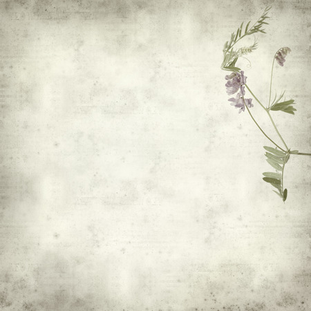 textured old paper background with purple vetch flower photo