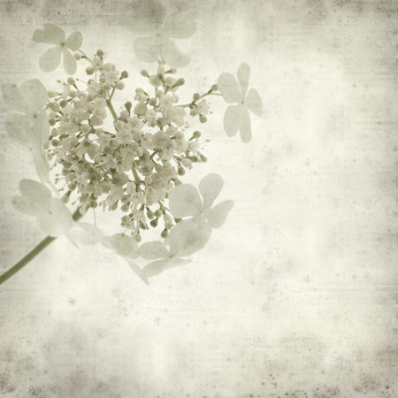 textured old paper background with guelder rose photo