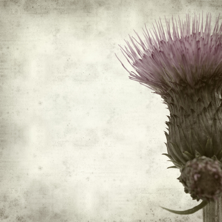 textured old paper background with thistle photo