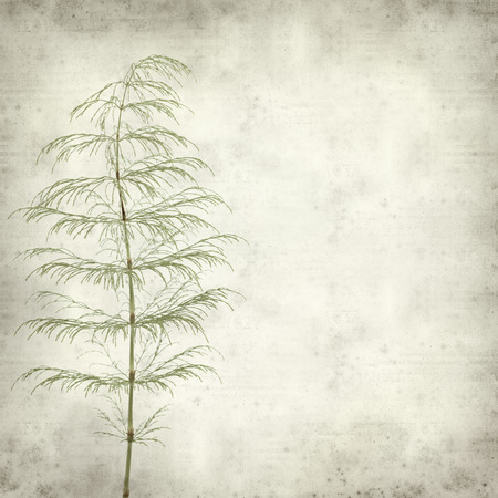 textured old paper background with horsetail plant photo