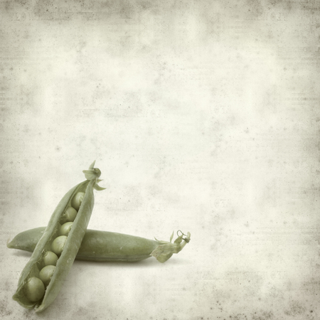 textured old paper background with green pea pods photo