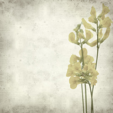 textured old paper background with meadow vetchling photo