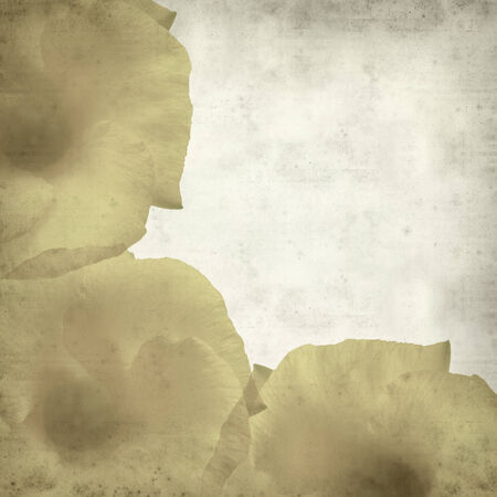 textured old paper background with yellow oleander photo